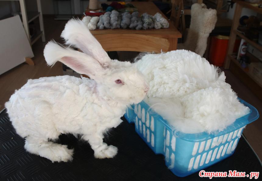 прически для кроликов фото