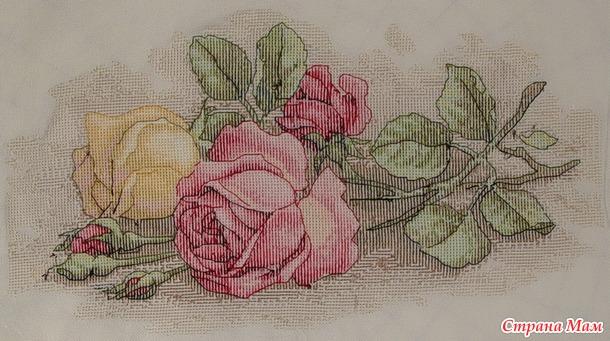 Вышивка срезанные розы дименшенс 2