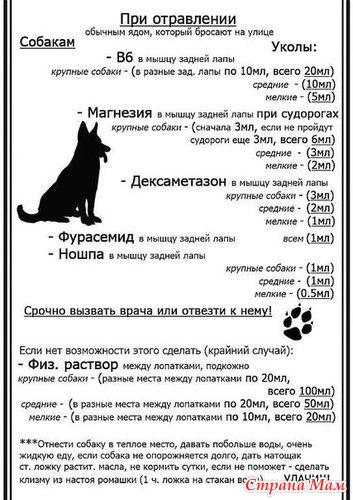 Как в домашних условиях отравить собаку - Pumps.ru