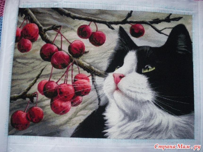 Вышивка коты от хаед