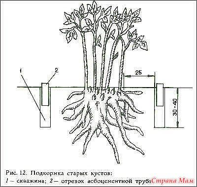 http://st.stranamam.ru/data/cache/2016may/11/52/19558447_43598nothumb650.jpg