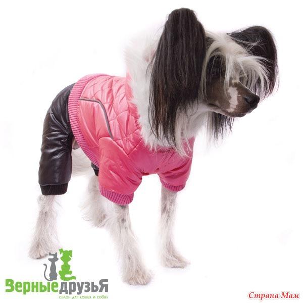 Выкройки одежды для китайских хохлатых собак своими руками