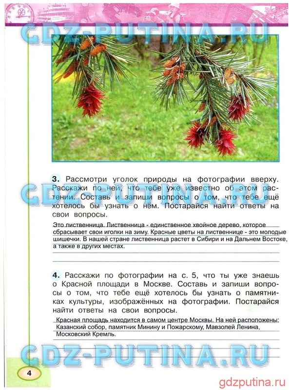 ГДЗ ответы окружающий мир Новицкая, Плешаков 3 класс