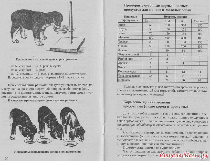 Правильное Питание Щенка Овчарки
