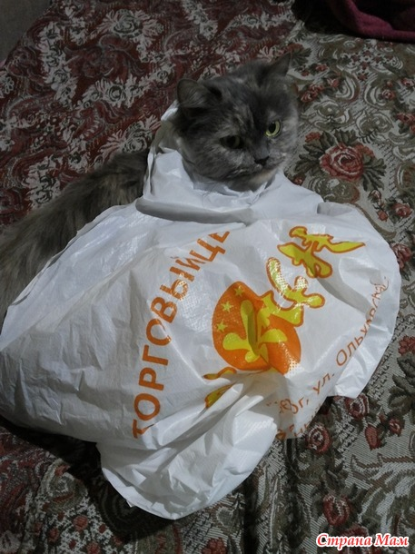 Мотря чудит)))
