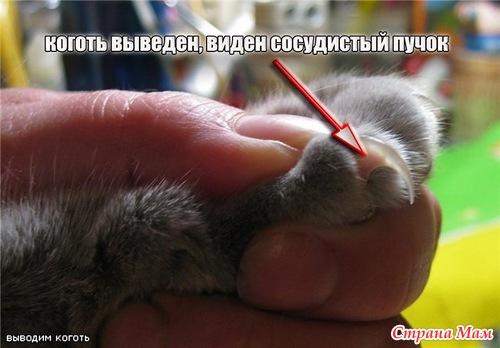 Как и чем обрезать коту когти в домашних условиях