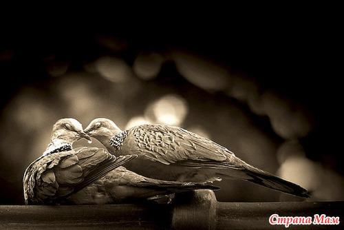 Любовь, черно белые фото