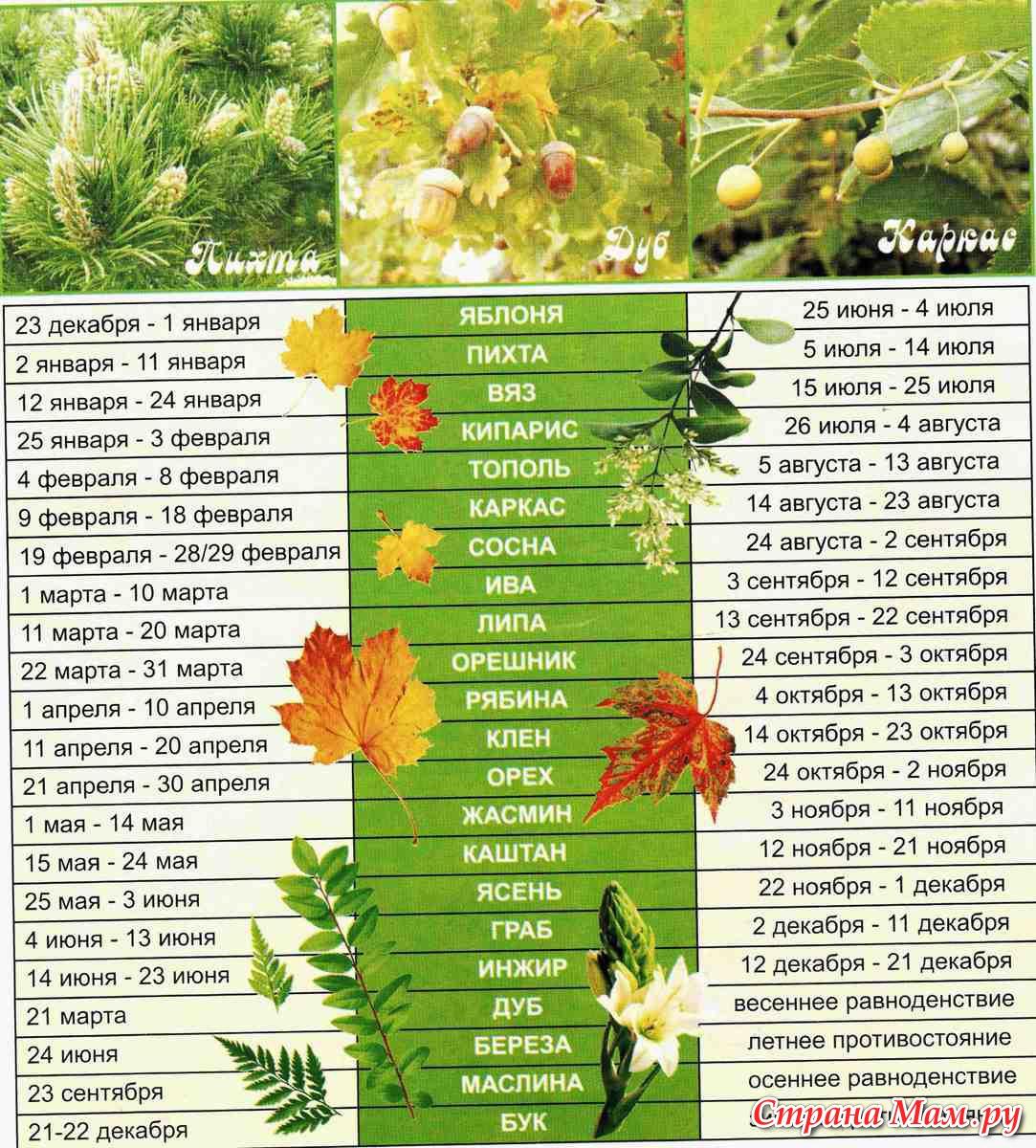 Цветы полевые картинки на рабочий стол