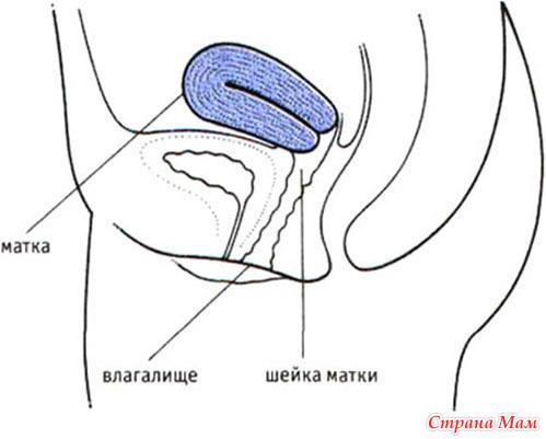 Выливается сперма можно ли забеременить