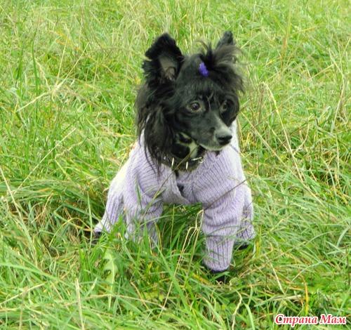 Комбинезон для собаки - Вязание - Страна Мам