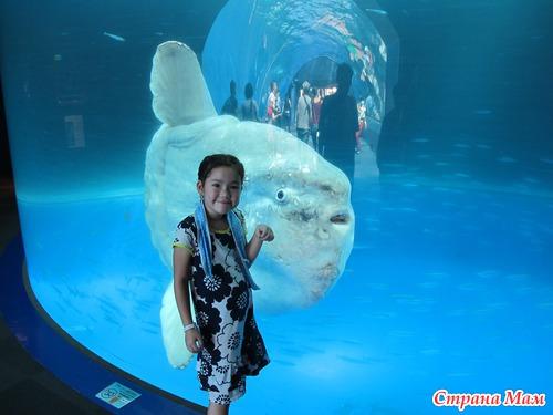 Океонариум  Sea paradise