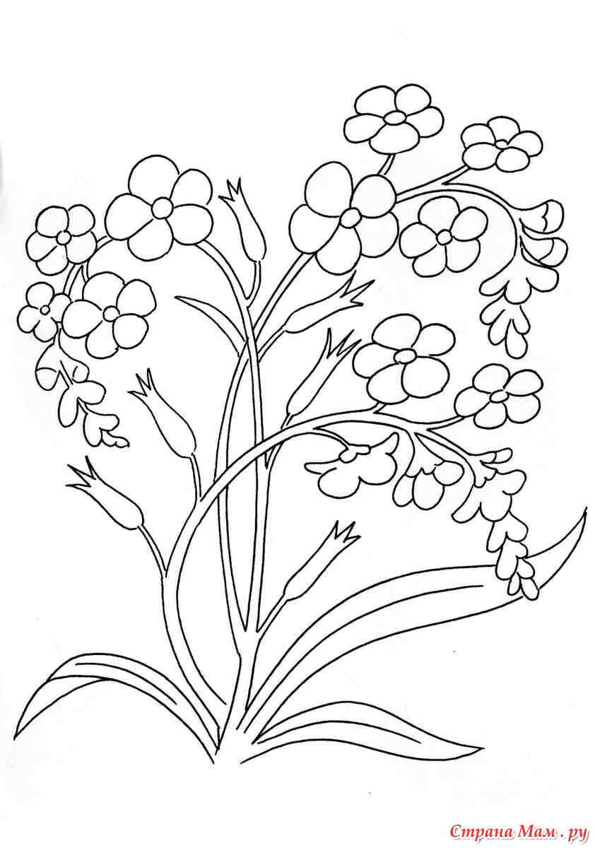 Полевые цветы - Разукрашки - Страна Мам