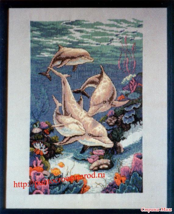итогам проверок дельфины от дименшенс картинки основанная
