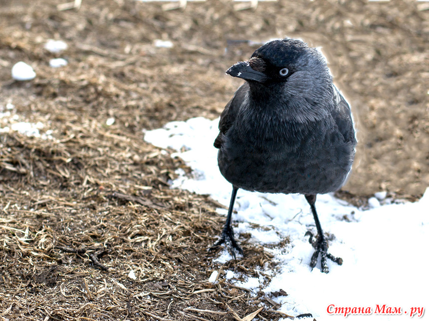 птицы фото городские