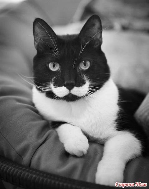 Коты, прославившиеся благодаря своему необычному окрасу!