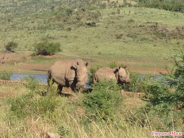 ЮАР (Южно-Африканская Республика)