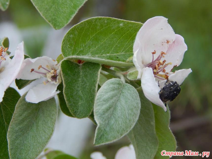 Жучки едят цветы