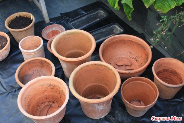 Как посадить луковичные в горшки для обильного цветения весной.
