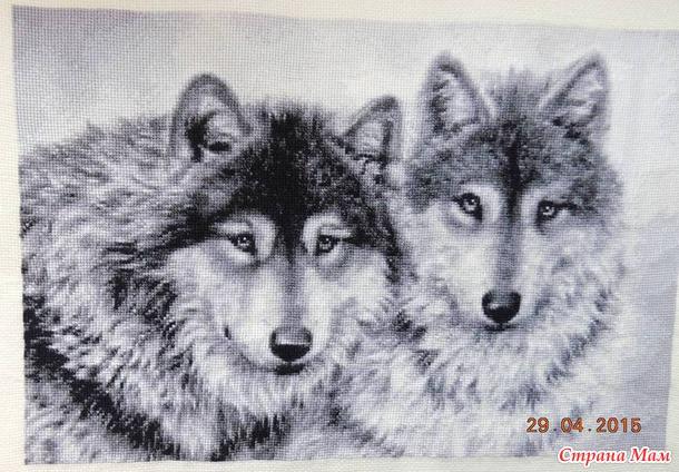 *Мои Волки готовы