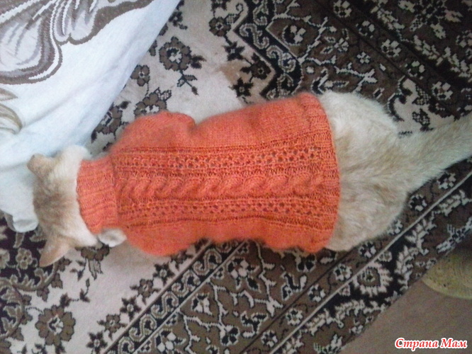 вязание кот сфинкс