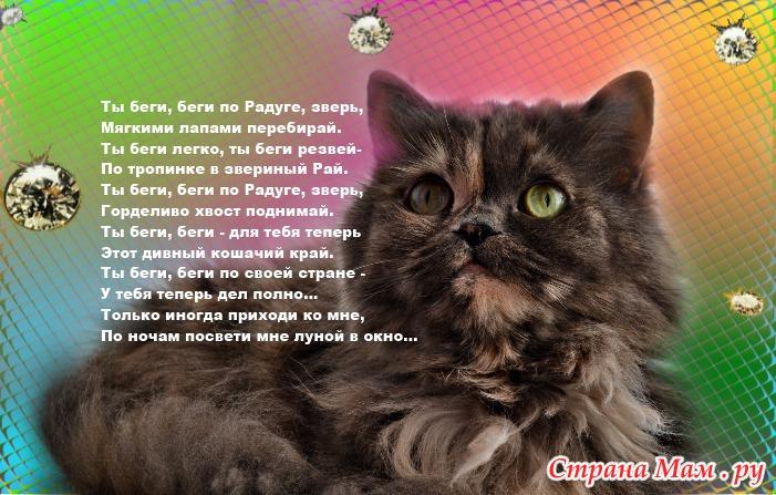 ковкой картинки о потере кошки европейца такое цветовое