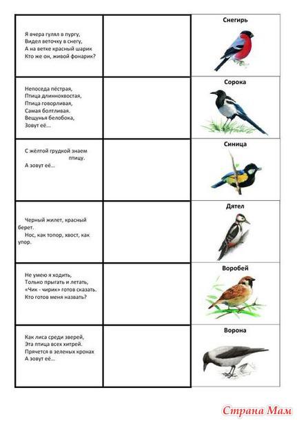 сожалению, показать загадки о птицах в картинках детям спешите