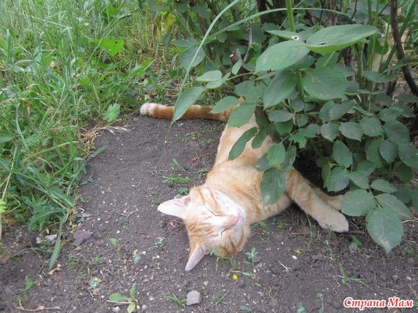 Куда уходят коты?