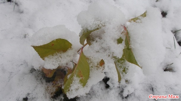 .. Нет! не Март! …И в лесу ещё дремлет спокойствием снег...
