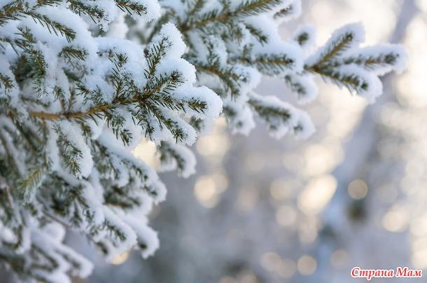 Зимние фотообои на рабочий стол