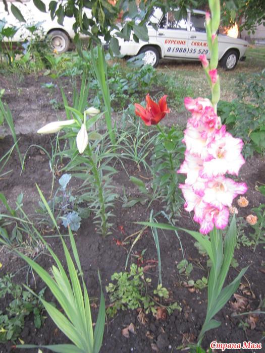Меч и цветы 30