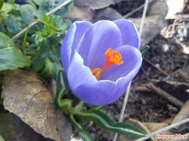 Весна пришла! (Дополнила)