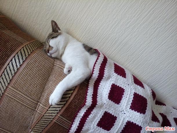 Продолжение истории про кота из приюта