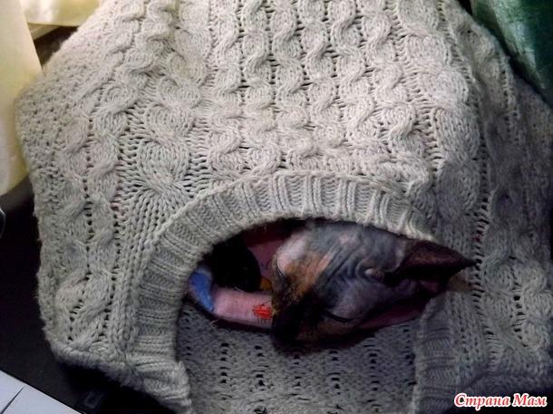 Настали холода... котики одели свитера...