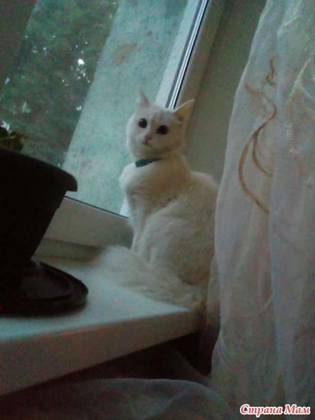 Помогите кошечке найти дом и любящих хозяев. Уже нашли.