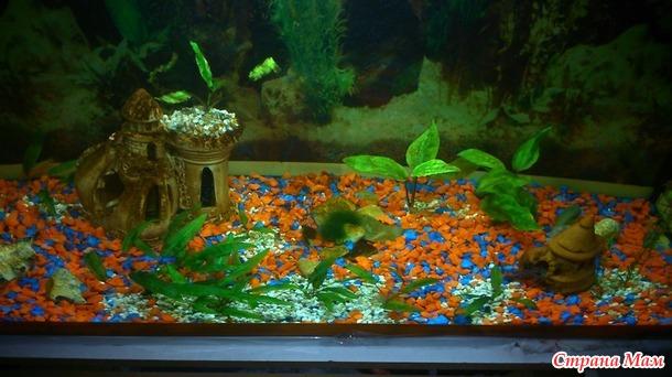 Запустила новый аквариум...