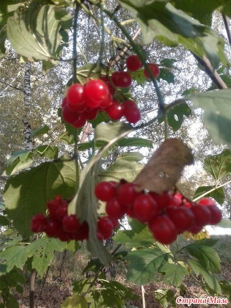 Осенний лесок