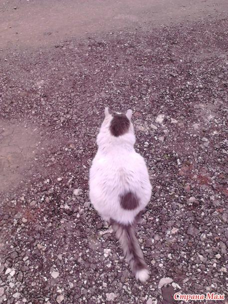 Вот кот так кот, котище!