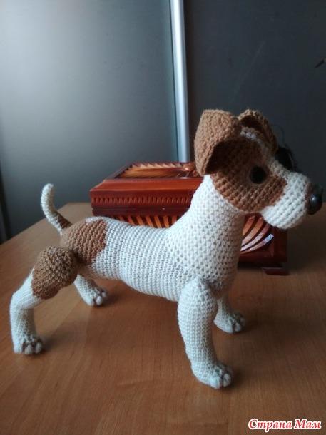. ЖАН-щенок, породы джек рассел терьер