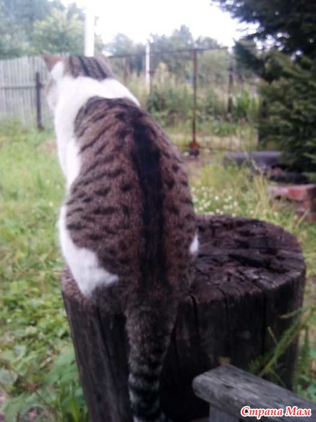 Продолжение истории про нашего кота из приюта№ 3