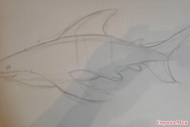 . Я акула Ту-ру-руру (семь метров... почти)