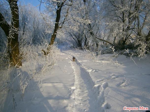 Тропинка в сказочный лес. ( фото)