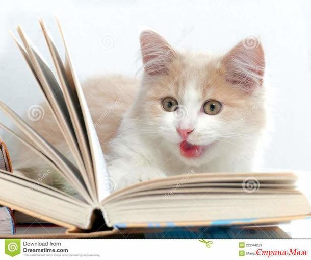 Кот учёный и собака