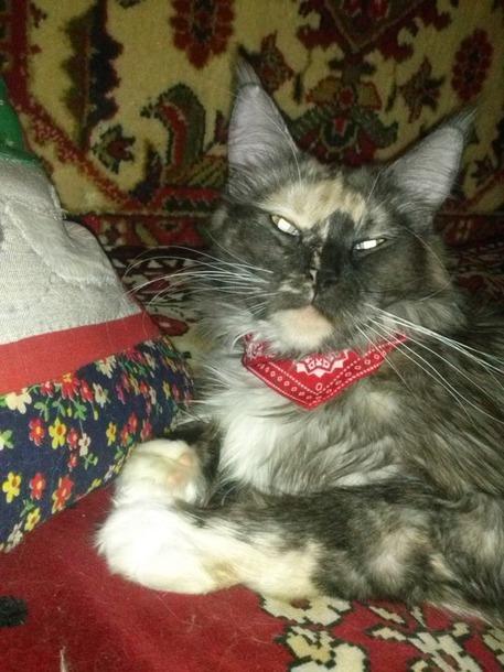 Шлейка и ошейник для кошки+
