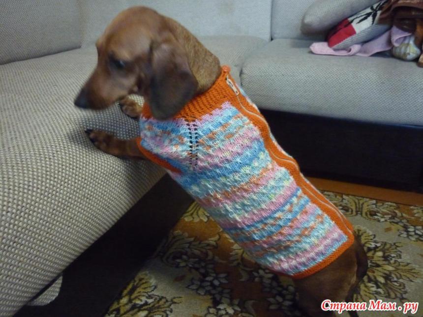 одежда для таксы гардероб для наших любимых питомцев собак кошек