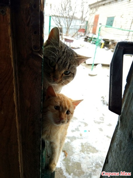 Кошачья авантюра.