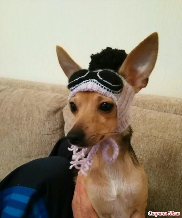 вязаная шапка для собаки спицами вгу вязаные головные уборы