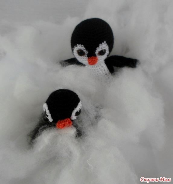 . А я живу в Антарктиде!!! (Адвент-игра)