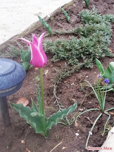 Во саду ли, в огороде...