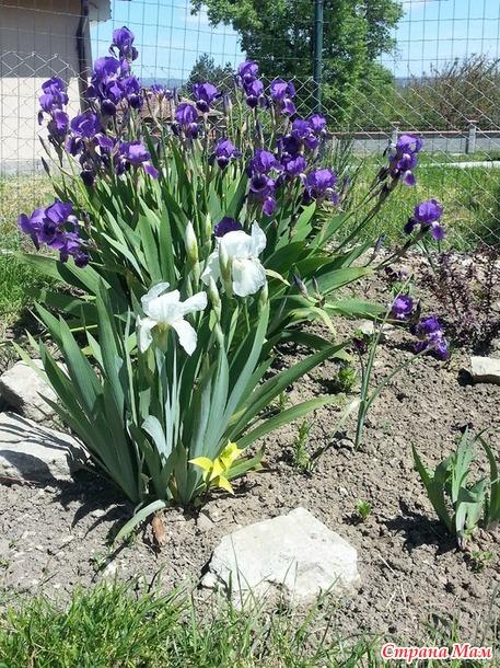 Во саду ли... Лето будет!