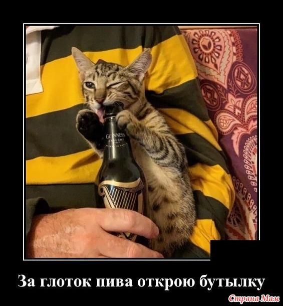 Жизнь кошачья. 4.